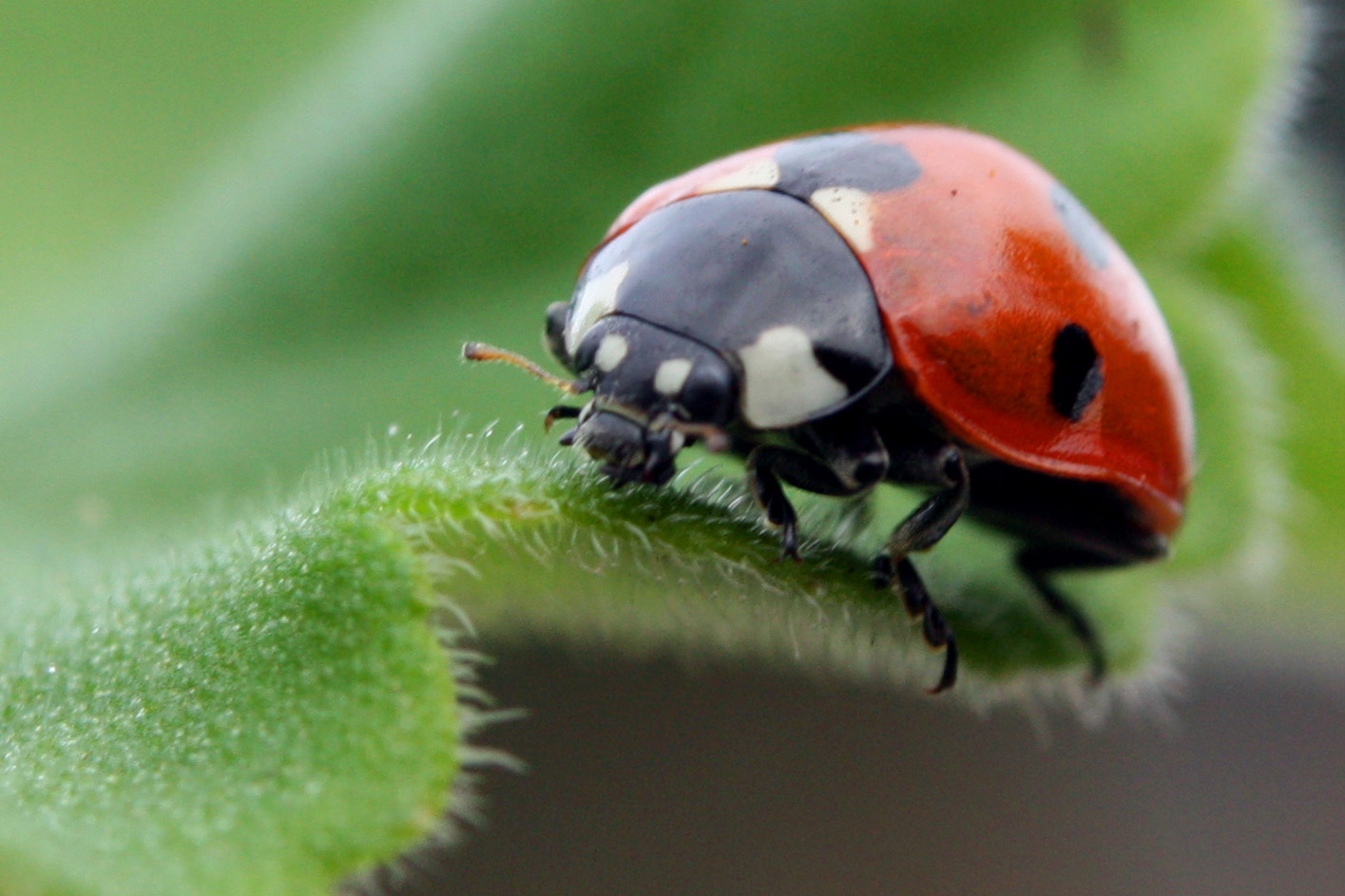 Lady Bug: Photo courtesy of Charlesjsharp